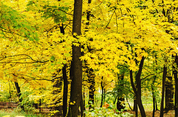 Automn forest